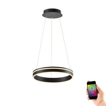 Lámpara Colgante Paul Neuhaus Q-VITO LED Antracita, 1 luz, Mando a distancia