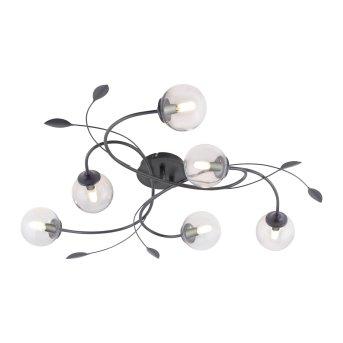 Paul Neuhaus WIDOW Lámpara de Techo LED Negro, 6 luces