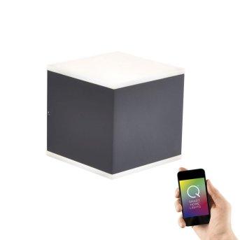 Paul Neuhaus Q-AMIN Aplique LED Antracita, 2 luces, Mando a distancia, Cambia de color