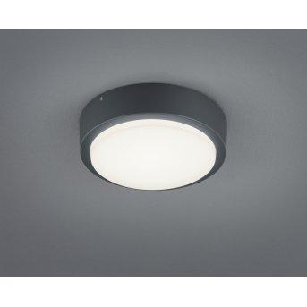 Trio BREG Aplique LED Antracita, 1 luz
