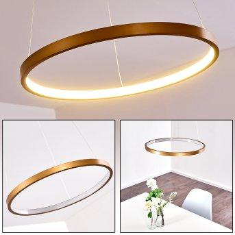 Canisteo Lámpara Colgante LED dorado, 1 luz