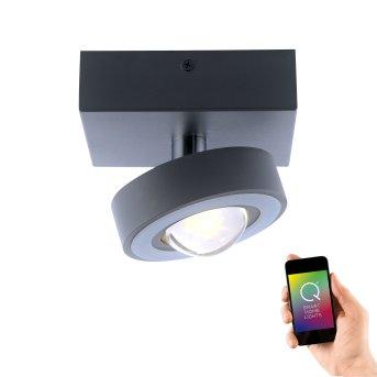 Lámpara de Techo Paul Neuhaus Q-MIA LED Antracita, 1 luz, Mando a distancia