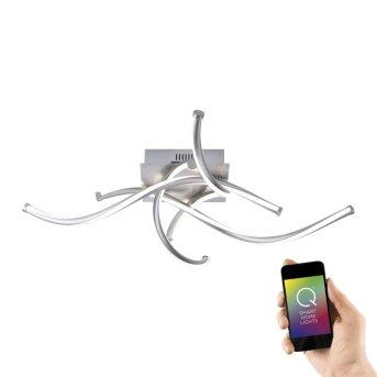 Paul Neuhaus Q-MALINA Lámpara de Techo LED Níquel-mate, 4 luces, Mando a distancia